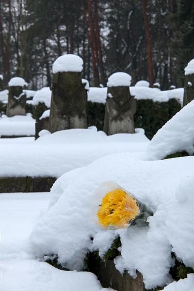 DD0212: o.T. (Sowjetischer Garnisonfriedhof/Albertstadt/Dresden 2013)