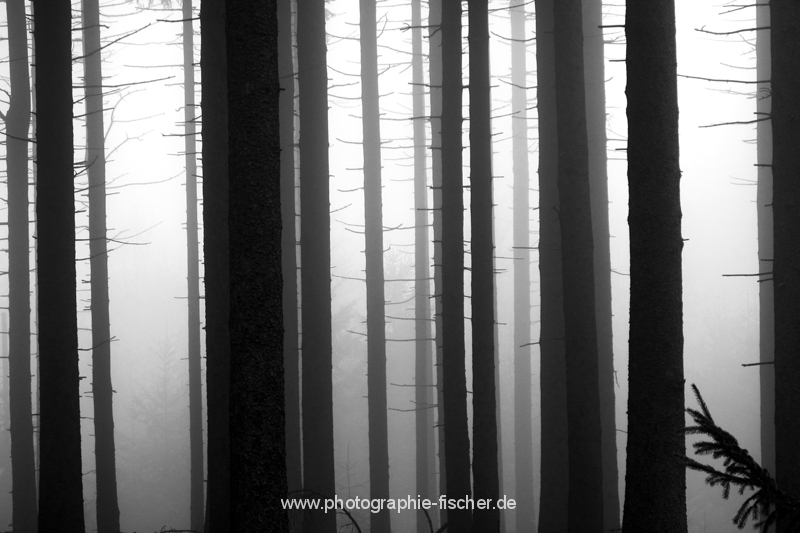 0807sw: o.T. (Osterzgebirge 2012)