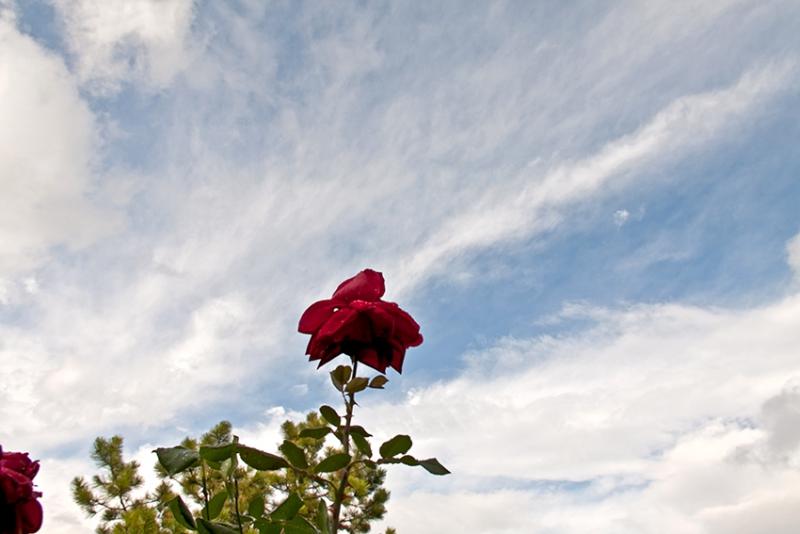 0644 o.T. (Ferrazza/Italien 2012/14)