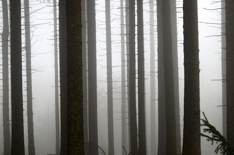 0807: o.T. (Osterzgebirge 2012)
