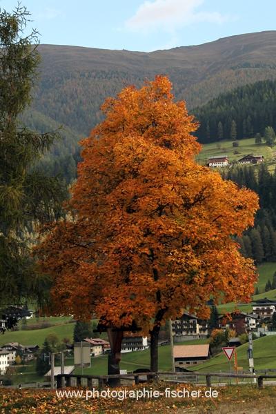 PK0935: o.T. (Sextener Dolomiten, Italien 2014)