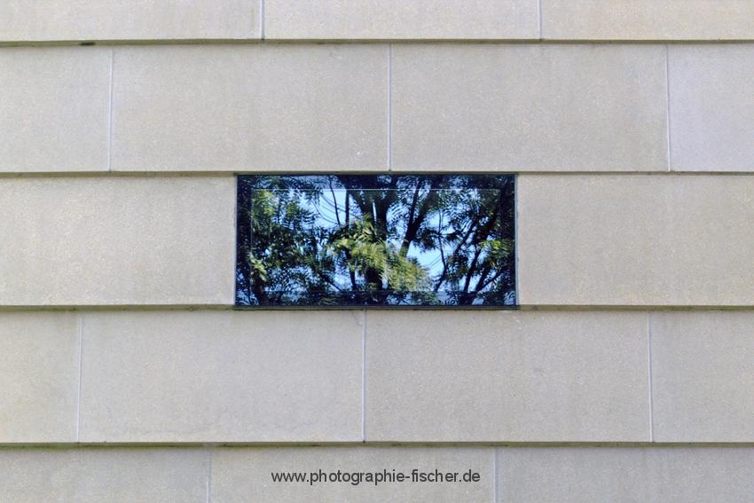 PK0982: Natur in der Synagoge (Dresden 2009)