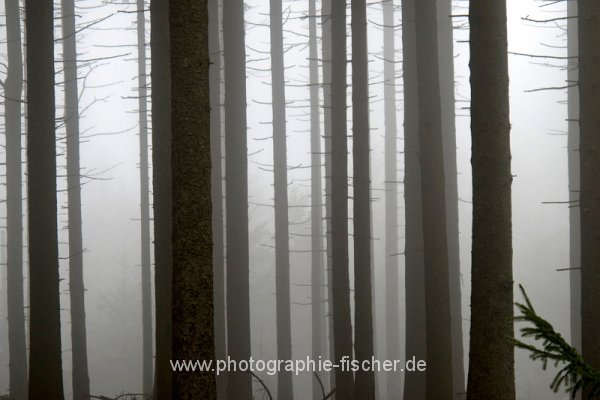PK0807: o.T. (Osterzgebirge 2012)
