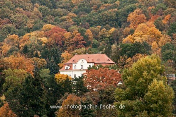 PK0814: o.T. (Herbst in Dresden-Wachwitz; 2013)