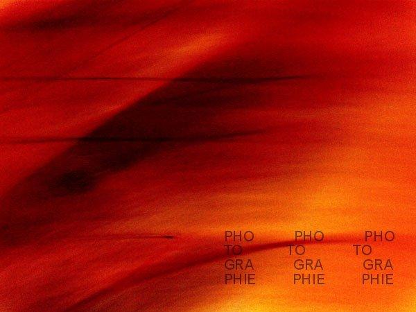 PK0088a: Keine Roten Rehe im Detail (Hamburg 2008)