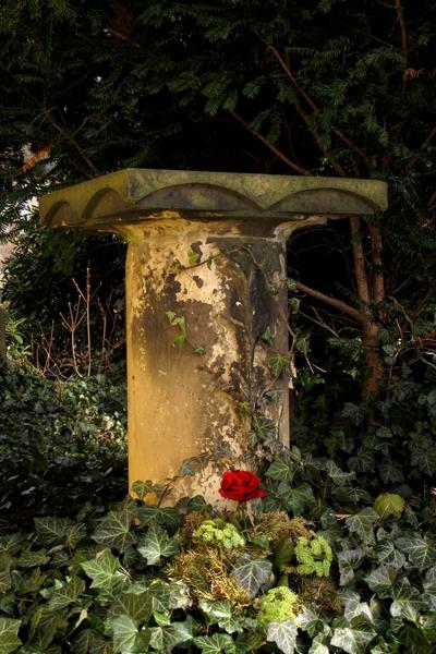 PK0694: o.T. (Friedhof Dresden Hosterwitz 2012)