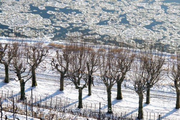PK0610: o.T. (Elbe im Winter, Blick vom Lingnerschloß, Dresden 2012)
